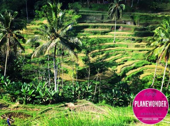 Planewonder-Bali (3)